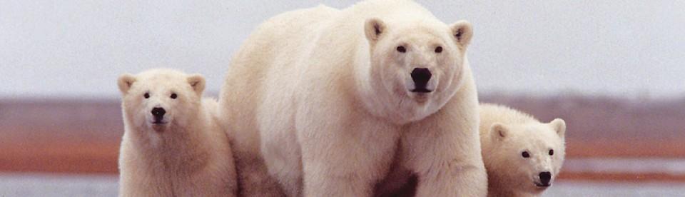 polar bear jokes polar bear club